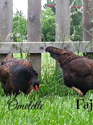 From the Farm Blog Hop – 6/20/2014