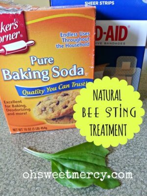 A Natural Bee Sting Treatment in Your Back Yard