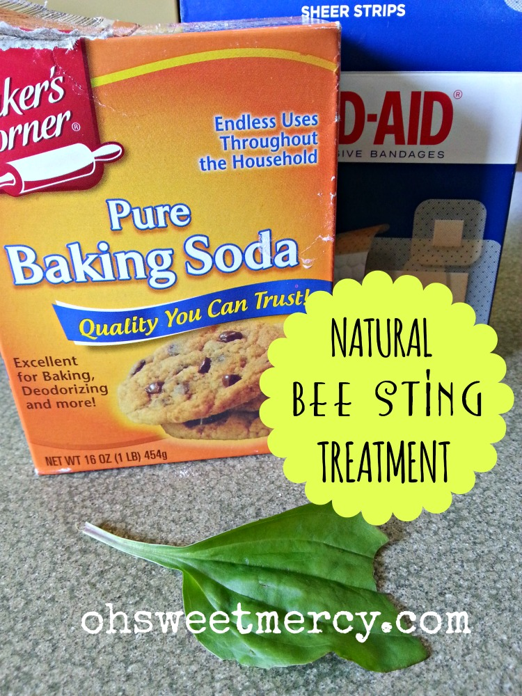 Natural Bee Sting Treatment