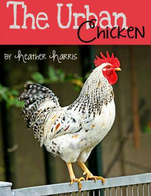 Urban Chicken book cover