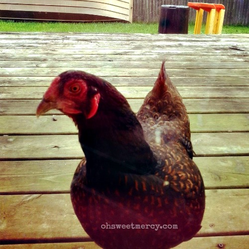 chicken drive thru omelette 500