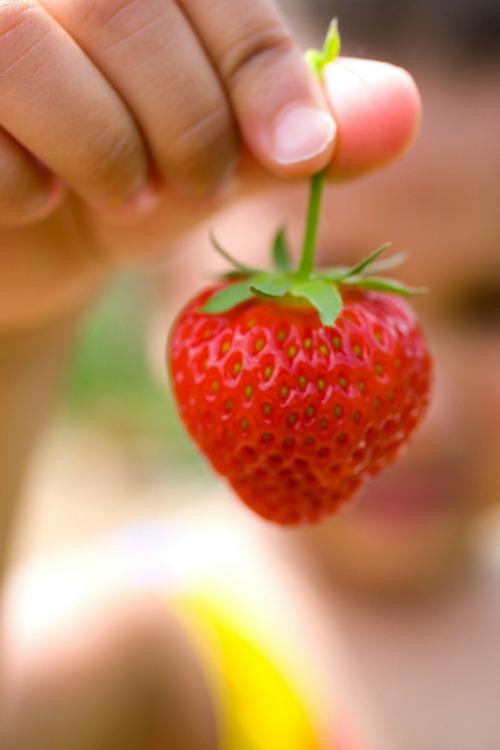 Kid with strawberry - Ripe Strawberry - Darren Baker 500