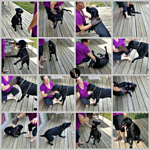 How to Clean Your Dog Without Shampoo - e-cloth Review | #reviews #naturalcleaning #ecloth #naturalliving